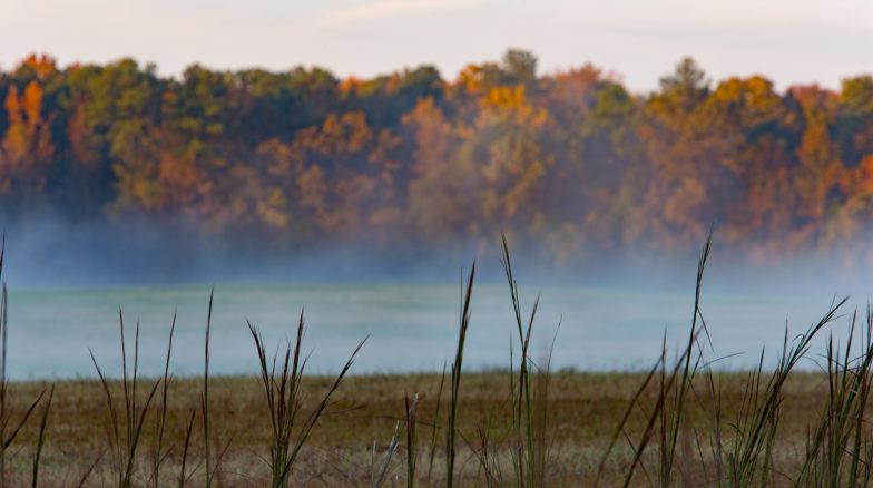 Surface 678 - Horseshoe Farm Nature Preserve