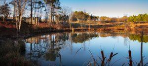 NC Museum of Art Stormwater Pond