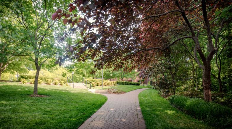 Surface 678 - Elizabeth Herring Garden