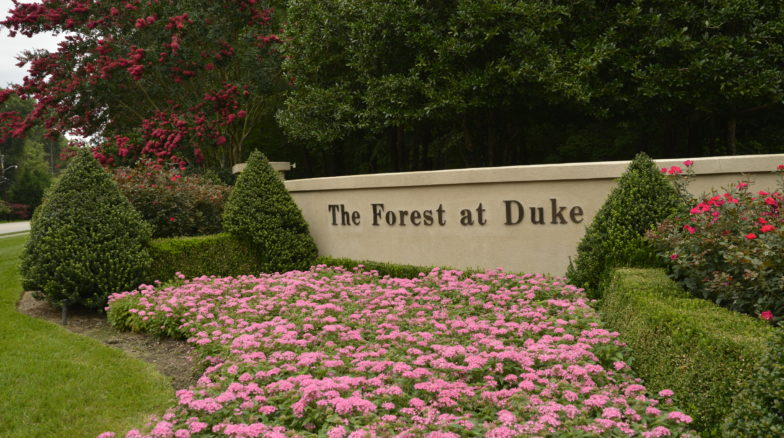 Surface 678 - The Forest at Duke