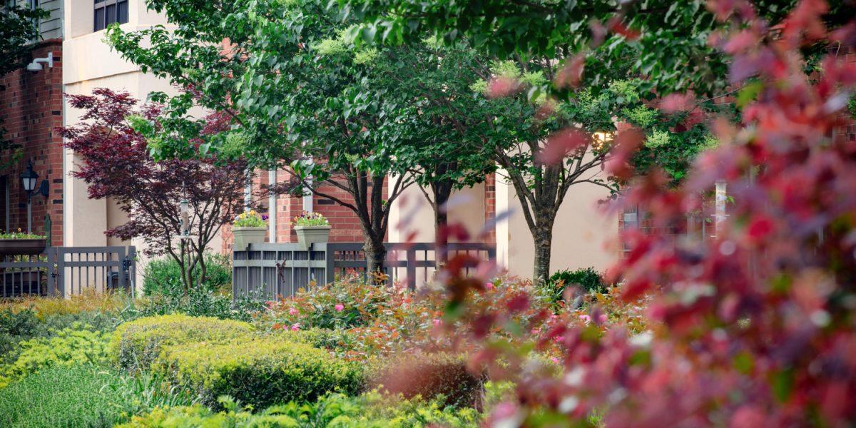 The Pines at Davidson